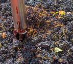 La vendimia en D.O. Rioja llega al final con una calidad de uva excelente