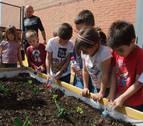 Los colegios Rochapea y Sanduzelai cuentan este curso con huertas ecológicas
