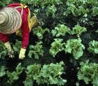 Mujeres rurales: