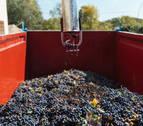 La DO Rioja finaliza su cosecha más temprana con 349 millones de kilos