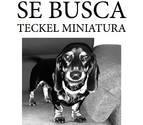Ofrecen 10.000 euros de recompensa por un perro perdido en Alcalá de Henares