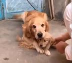 La emocionante reacción de una perra cuando intentan quitarle a su cachorro