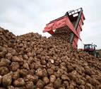 Ayudas de 200.000 euros al cultivo de la remolacha azucarera en la Zona Media