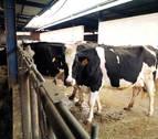 Detectado un caso de vaca loca en una explotación ganadera de Salamanca