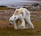 El falso rostro del cambio climático