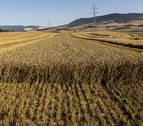 Un clima muy adverso deja en el campo indemnizaciones por 16 millones en Navarra