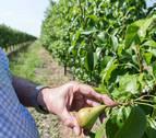 El granizo ha causado en Navarra daños en más de 31.200 hectáreas y la sequía en 11.200