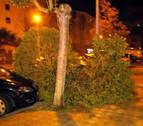 Cristales rotos y árboles y señales caídos: el viento causa múltiples daños en Pamplona