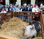 El susto de la cerda 'Úrsula' en la fiesta del agro en San Sebastián