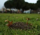 Topos y topillos agujerean los jardines de Pamplona