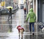 Los veterinarios abogan por censar con ADN a los perros de toda Navarra