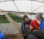 Cultivos de invernadero con menos plástico