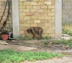 Reabren un caso por posible maltrato a animales en unas fincas de Cascante