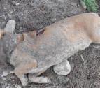 Imputado por matar un perro y enterrarlo en San Adrián
