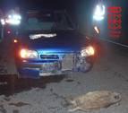 Los atropellos a animales, primera causa de accidentes en la Ribera