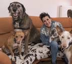 Osho, el hermano mayor de dos perros y tres gatos
