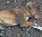 Condenado a 8 meses de prisión por matar a un perro de un disparo en Olite