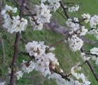 Se prevé una primavera en Navarra más cálida de lo normal