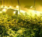 Dos detenidos en Murchante por cultivar marihuana con electricidad ajena