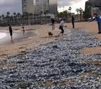 Miles de medusas toman una playa de Barcelona