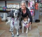 Un refugio para los animales sin techo en una peluquería canina de Ansoáin