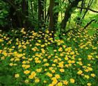Las plantas son capaces de reconocer si sus vecinas son