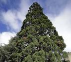Los árboles más altos, los nuevos pararrayos de Pamplona