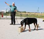 Los perros también hacen deporte