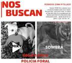 Policía Foral pide ayuda para encontrar a 'Miki' y 'Sombra', dos perros robados en Pitillas