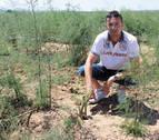 Las tormentas causan daños en cultivos y viviendas de Tierra Estella