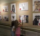 La Mancomunidad de la Comarca de Pamplona invita con una muestra a la adopción de animales