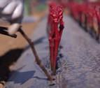 Navarra produce entre el 25 y el 30% de todos los injertos de vid en España