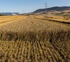 La cosecha de la pasada campaña cerealista navarra alcanzó 871.000 toneladas