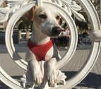 'Pipper', el primer perro 'influencer' de España, visita San Sebastián