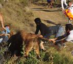 Emilio Ramos, pastor del Pilón, fue corneado por una vaca que iba