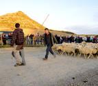 Carcastillo prepara la entrada de los primeros rebaños a Bardenas