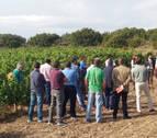 INTIA participa en un proyecto para que el vino navarro sea un referente en sostenibilidad