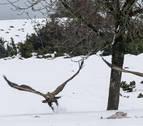 Sakana procura una variedad de hábitats a más 140 especies de aves
