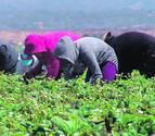 CC OO pide mayor control frente a las mafias en la agricultura en Navarra