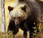 Tras las huellas del oso y el lobo, a 4.279 km de Navarra