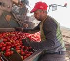 ¿Cuánto tomate comen los navarros?