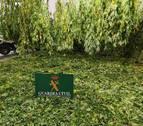 Tres detenidos en Estella por tráfico de drogas e incautadas 97 plantas de marihuana