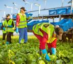 Florette recogió en Navarra 9.400 toneladas  de vegetales