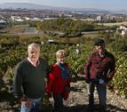 La recuperación de una viña y su caldo en Ansoáin evocan la época del chacolí