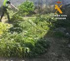 La Guardia Civil se incauta de 40 kilos de marihuana en Caparroso