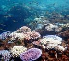 El 78% de los corales en el litoral alicantino está afectado por el cambio climático