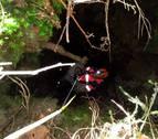 Rescatan un perro que cayó dentro de una sima de 30 metros en Abaurrea Baja