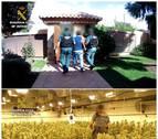 13 detenidos tras la incautación de 33.000 plantas de marihuana