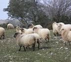UGT y LAB firman el convenio de comercio de ganadería de Navarra para tres años