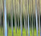 El triunfo de una fotografía en movimiento